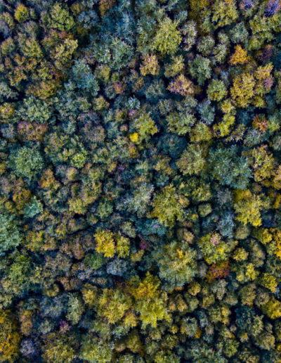 Őszi erdő, Mecsek