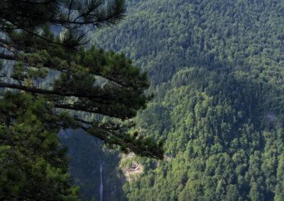 A Perućica őserdő