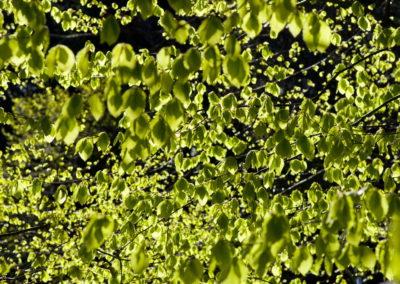 Friss levelek