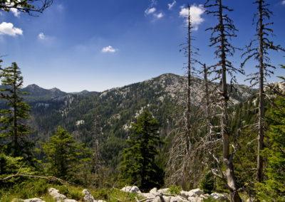 Őserdő a Velebitben