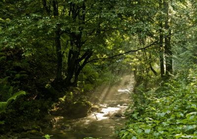 A Kovacica-patak Jankovacnál