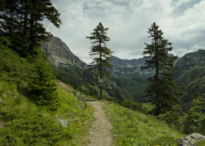 Az országhatárt csak egy tábla jelzi a fenyő törzsén, Maglic, Sutjeska National Park, Bosznia-Hercegovina