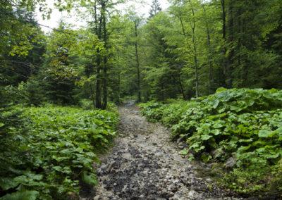 A Suha völgyében az út a patakmederben fut, Maglic, Sutjeska National Park, Bosznia-Hercegovina