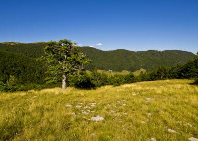 Szemben a Mali Golić, a mi utunk a szép magányos bükk mellett vezetett, Sjeverni Velebit National Park