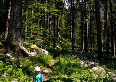 A Hajdučki kukovi őserdejében egy évvel később, Sjeverni Velebit National Park