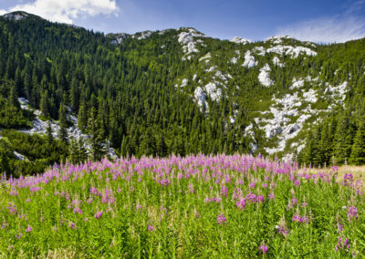 A Velebiti Botanikus Kert részlete, Sjeverni Velebit National Park