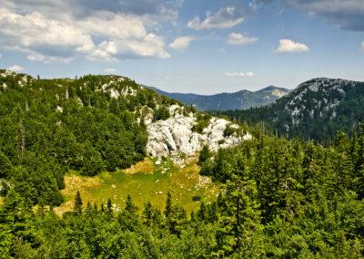 Egy kis zöld a Rožanski kukovi sziklái között, Sjeverni Velebit National Park