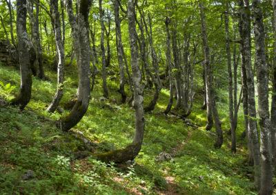 Az erdő nagyjából ilyen végig, Sjeverni Velebit National Park
