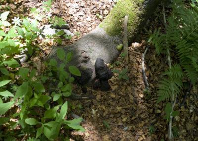 Medvenyom, Sjeverni Velebit National Park