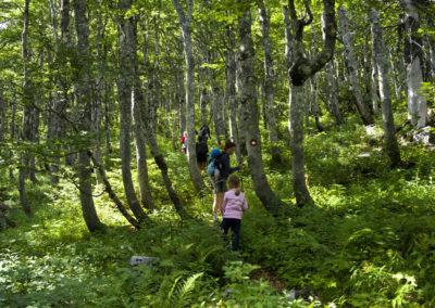 Varázslatos bükkös a Goljak tövében, Sjeverni Velebit National Park