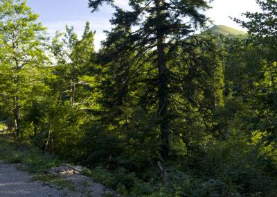 Zárókép az erdőből: megkerültük a Goljakot, a nap lemenőben, Sjeverni Velebit National Park