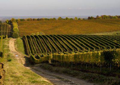 Fennsíiki szőlők október idusán