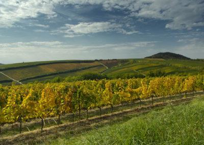 Aranyló ősz a villányi hegyen, Villányi-hegység, Fekete-hegy