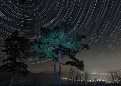 Csillagív fenyővel // Flóra-pihenő, Pécs