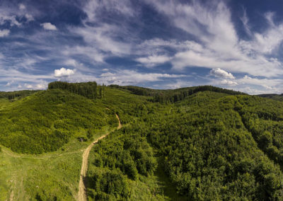 Zselici erdő Alsókövesd határában, az utak Nagymáté felé vezetnek