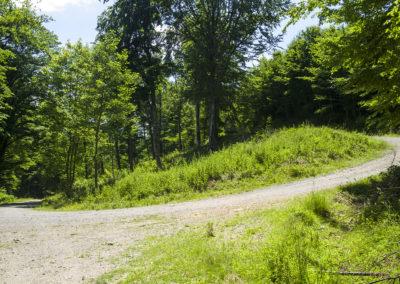 Elértük az erdészeti út végét, valahol balra partizánok nyugszanak