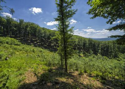Az átvágás után – innentől már az erdőn kell átvágni, toronyiránt