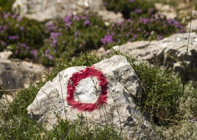 Fűszernővények a sziklák közt mindenütt
