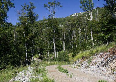 A Veliki Sadikovacról lefelé keresztezett murvás út, melynek szélén laskát és vargényát találtunk