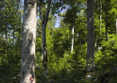 Dús vegetáció a Sadikovac oldalán