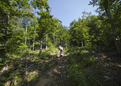 Meredek erdei ösvény